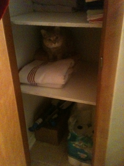 get out of there cat. you are not a towel. in fact I know if i used you as one you would not enjoy getting wet at all and i would be covered in hair.