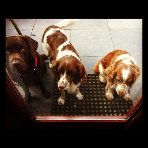 #dogies #levi #sparky #louis (Taken with Instagram)