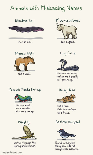 There are so many confusing animal common names. Here are some of my favorites. Oh, and now you can buy it as a print and amaze your friends with your nerdery!