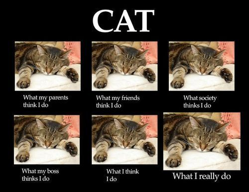catasters:  What I really do…