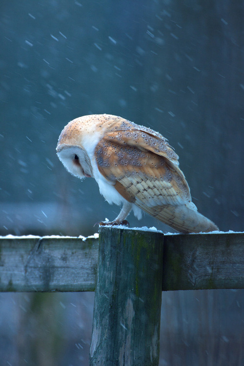 """Hang your head down in shame little owl!"""