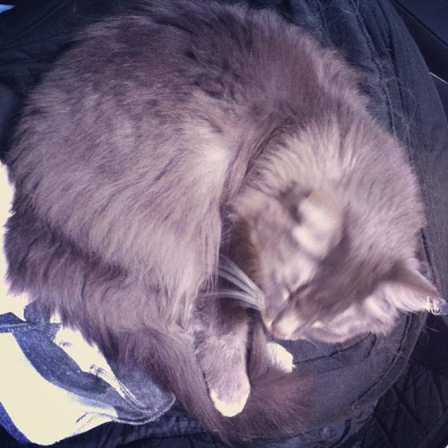 Sleepy times. (Taken with Instagram)