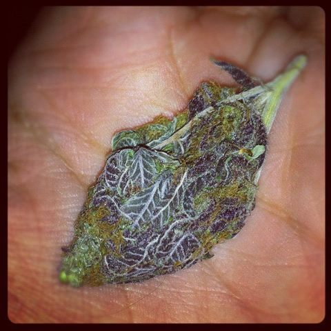 youknowitsdank:  420puffpuffpass420:  Oh. My. God.  trim that up