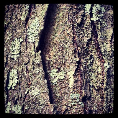 ashtoneliseloves:  Tree Bark #bark #tree #moss #summer2012 #rough #nature #brown #evening #summer #photooftheday #instagram (Taken with Instagram)