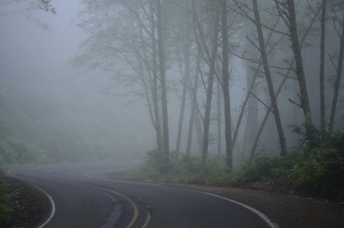 outdoorsanctuaries:  Foggy ~ SOOC (by Jack Andreasen)