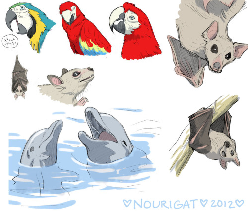 New animal sketches by Natalie Nourigat (tally-art)
