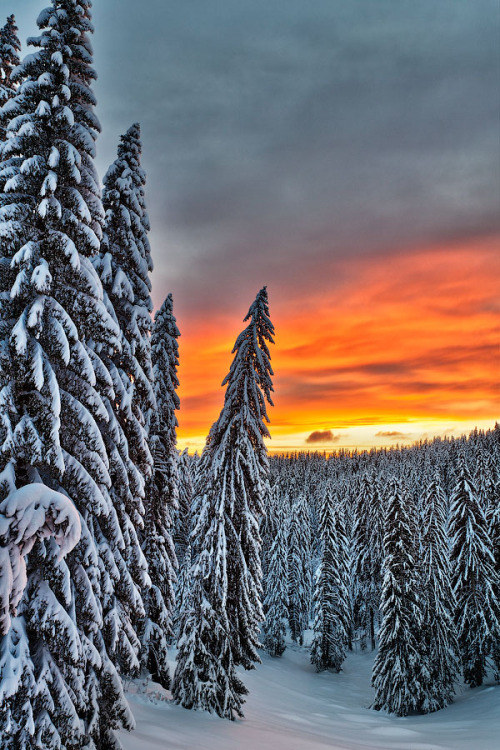 woodendreams:   (by Evgeni Dinev)