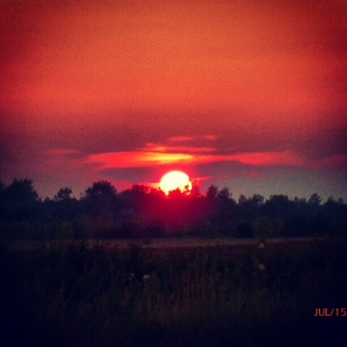 #sun #trees #forest #field #grass #sunset  (Taken with Instagram)