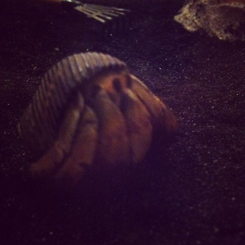 New hermit crab. Name's Gohan (Taken with Instagram)