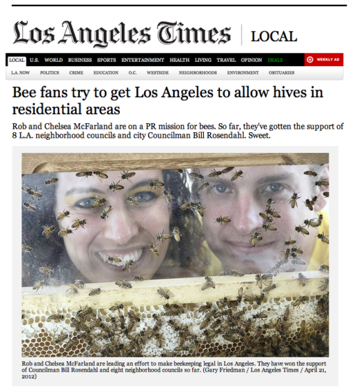 "ARTICLE: Bee fans try to get Los Angeles to allow hives in residential areasBy John Hoeffel, Los Angeles Times - July 14, 2012  Rob and Chelsea McFarland are on a PR mission for bees. So far, they've gotten the support of 8 L.A. neighborhood councils and city Councilman Bill Rosendahl. Sweet.  Rob McFarland was in his florally vivacious backyard, tending his vegetable plot, when he noticed some honeybees buzzing around a tree. A few minutes later some bees had become tens of thousands. ""The sky was sort of darkened out,"" he recalled. ""It was kind of a presence that I couldn't ignore."" McFarland, a social media entrepreneur and avid gardener, was intrigued by honeybees and aware that hives have been dying from a mysterious cause labeled colony collapse disorder. ""I knew enough about honeybees to know they were in real trouble,"" he said. ""So the last thing that I wanted to go down in my own backyard, literally, was for these bees to be exterminated."" He left frantic messages on a hotline operated by Backwards Beekeepers, a Los Angeles club that sent a member to his house. The beekeeper cut a clump of bees about the size of two footballs out of the tree without wearing a protective suit, showing an enthralled McFarland that the swarm was docile. ""It totally captured my attention, and I began to obsess over it a little bit,"" he said.  McFarland and his wife, Chelsea, became interested in beekeeping but discovered that Los Angeles does not allow hives in residential zones. So, the McFarlands decided to launch an unusual grass-roots drive to change the city's law by first winning support from at least 10 of L.A.'s 95 neighborhood councils. Now, almost a year and a half later, their devotion has won support from eight councils. And an enthusiastic city councilman has initiated a formal study, a first step that could bring L.A. on board with other bee-friendly cities, such as New York, Seattle, San Francisco and Santa Monica. ""We have to be clear that this environment that we live in is threatened, that bees are an essential part,"" said Councilman Bill Rosendahl, who boasts that he has two wild hives in his yard.  The McFarlands, with their own money and what they raised at a ""yellow-tie"" fundraiser, started a nonprofit organization called HoneyLove. (""Chelsea's always referred to me as 'honeylove,' "" Rob explained.) With friends, family and allies, they host regular educational events across the city, such as honey tastings and mead-making. Rob, 32, who is lanky and a little laconic, and Chelsea, 30, radiant and effervescent, have devised a strategy that relies heavily on their infectious passion for bees. ""They're just unhindered enthusiasm and love for what they're doing, and how can you not love that?"" said Kirk Anderson, a mentor to many L.A.-area beekeepers. McFarland learned from beekeepers how to capture swarms and remove unwanted hives. He has been stung more times than he can count but recalls one time with wry humor: ""I'd opened my veil to itch my nose real quick and the zipper snagged as I was closing it back up and right at that moment it was like Jedi bee shoots the gap right into my face and stings me right between the eyes,"" he said. The McFarlands have set up a sanctuary for rescued bees on a hilltop in the Simi Valley. One weekend, they installed a new hive among a dozen brilliantly hued ones surrounded by blooming mustard. Rob, sheathed in a beekeeper's suit, watched the bees stream out to explore, hovering and circling tentatively. ""You figuring it out?"" he asked gently.  Saving bees led the McFarlands to want to do more. Chelsea is a video editor who studied documentary filmmaking. Rob was working on a documentary on orangutans when they met. ""Chelsea and I realized that we could utilize the skill set that we've acquired over the years in marketing and media,"" Rob said. They have created a sprawling social media presence to promote bees. Besides a dot-org website, HoneyLove is on Facebook, Twitter, YouTube, Change.org, Tumblr, Pinterest, MeetUp, you name it. They have devised an ingenious campaign that blends zany fun and clever bee shtick, slyly anthropomorphizing the fuzzy yellow-and-black insects into huggable cartoons. At events, Rob sometimes wears a bee suit or a yellow T-shirt, and Chelsea typically appears more flamboyantly attired, often in a bee-striped tutu. ""It's pretty hard to ignore people when they are walking around in bee suits,"" Rob said. Rob has drawn some of the distinctive images they use, including a stylized queen bee with a crown, while Chelsea is the source of much of their playful creativity. ""I mean this in the most positive way. She's a drama queen,"" Rob said. ""A drama queen bee?"" Chelsea shot back.  The McFarlands first sought approval for residential beekeeping from their neighborhood council in Mar Vista, devising an approach that included a four-month feasibility study and extensive community outreach. ""Their energy, their happiness with which they have approached this is so amazing,"" said Maritza Przekop, a Mar Vista Community Council member who has worked with them. ""They have just jumped over every obstacle."" Endless meetings, it turned out, are Chelsea's forte, although Rob joins her for some. ""She has the sort of endurance and toughness,"" Rob said. ""I'd rather get stung by a hive of bees."" Neighborhood council members, used to dealing with irritated constituents, tend to be startled and pleased by the McFarlands. At a committee meeting of the South Robertson Neighborhoods Council, the two, finishing each other's sentences, answered questions about wasps, feral hives, stings, allergies, industrial agriculture, swarms, why bees are disappearing, laws in other cities and tainted honey. Besides Mar Vista, the McFarlands have won support from the neighborhood councils of Del Rey, Greater Griffith Park, South Robertson, Silver Lake, Hollywood United, Atwater Village and West L.A. And they won Rosendahl's admiration. ""They're both very positive spirits. They both take this seriously, and I enjoy that,"" said the councilman, who can extemporize eloquently about the role the endangered honeybee plays in pollinating flowers, fruits and vegetables, and in making honey and beeswax. The trouble with honeybees, of course, is that they can sting and some people are extremely allergic. ""That is a huge issue,"" Rosendahl said, adding that any ordinance will have to deal with the issue of neighbors. ""Education is part of the process. A bee doesn't come after you unless you somehow disturb them.""  Nearly every weekend, the McFarlands can be found somewhere talking up honeybees. On one sunny-warm, breezy-cool, everything-blooming day, Rob stood behind a table with a display case filled with bees scurrying around a honeycomb, explaining their highly complex habits. ""I'm sorry,"" interrupted Donna Salvini, who lives in Venice and has an organic garden she said is frequented by honeybees that just calmly hang out. ""I just find that insanely exciting."" ""It is, it is,"" Rob said. ""Because there's really nothing more magical,"" Salvini said. ""I mean they just do so much.""  [click here to read the article on latimes.com]  SIGN OUR PETITION TO LEGALIZE URBAN BEEKEEPING IN LOS ANGELES!!"