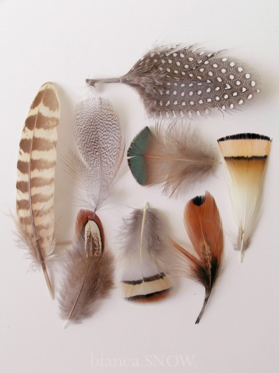 artcomesfirst:  Feathers of different birds