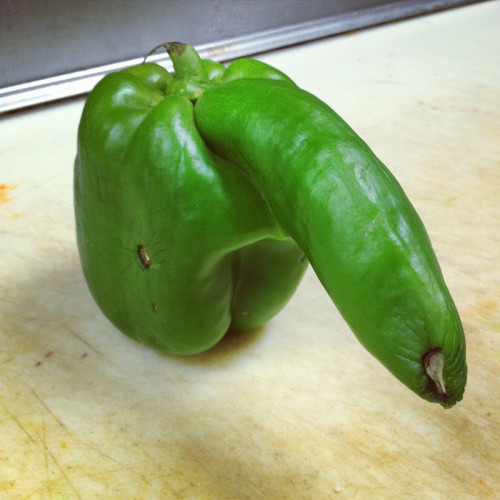 the-absolute-funniest-posts:  Green Pepper…