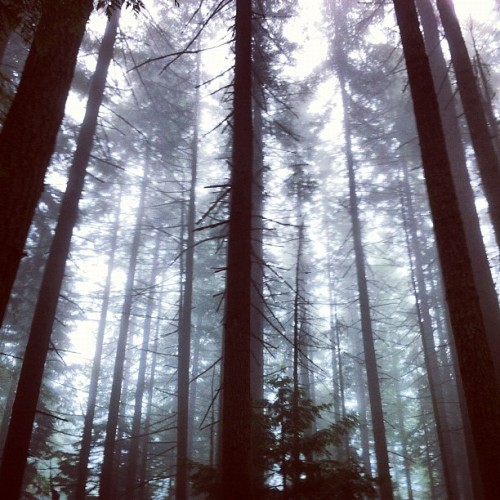 cosmocampbell:  #mountainbiking (Taken with Instagram at The Trails)