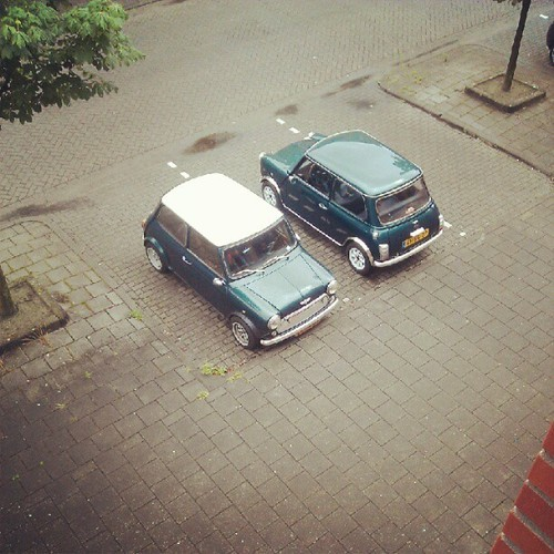 My Mini's found a friend :) This is romantic… Thanks!!