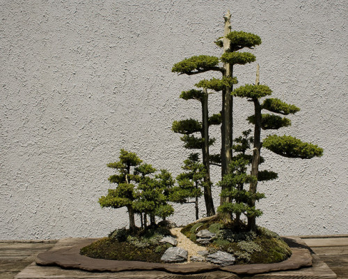 an-ickle-note-from-abithaxo:  Bonsai by Cayusa on Flickr.