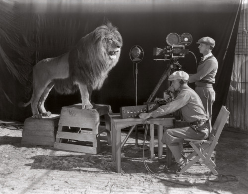 File Under: Things We Enjoy  Lion being filmed and recorded for MGM screen credits in 1928.  (via: fungazi)
