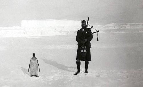 A member of the Scottish National Antarctic Expedition plays the bagpipes for an indifferent penguin, 1904.