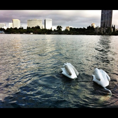Early meditation. #peace (Taken with Instagram at Lake Merritt)