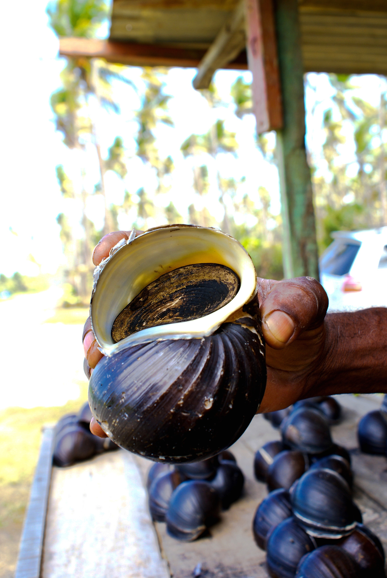 He sells shells by the seashore…Manzanilla, Trinidad.© Gaea Photography. Olivia Fern.
