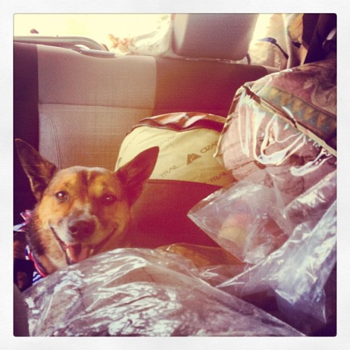 All packed and on the road. #camping #dog #nala #firewood #roadtrip #yosemite #summeradventures #summerfun  (Taken with Instagram)