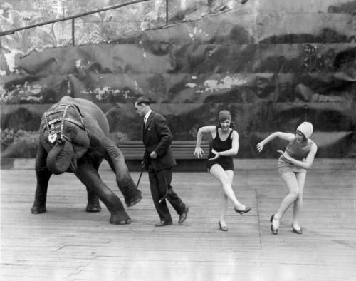 Dancing Elephant Joins the Charleston, USA, 1926