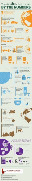 mothernaturenetwork:  A graphic look at the amount of water and fuel it takes to raise animals for food vs the amount it takes to raise plants for food, plus additional environmental information, may just have you rethinking your meat consumption.