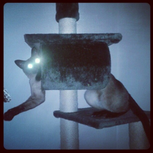 #cat #cats #catsofinstagram  (Taken with Instagram)