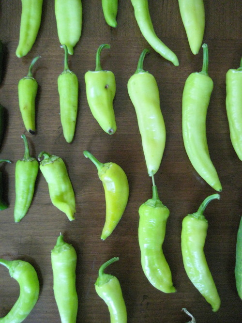 Banana Peppers 2012