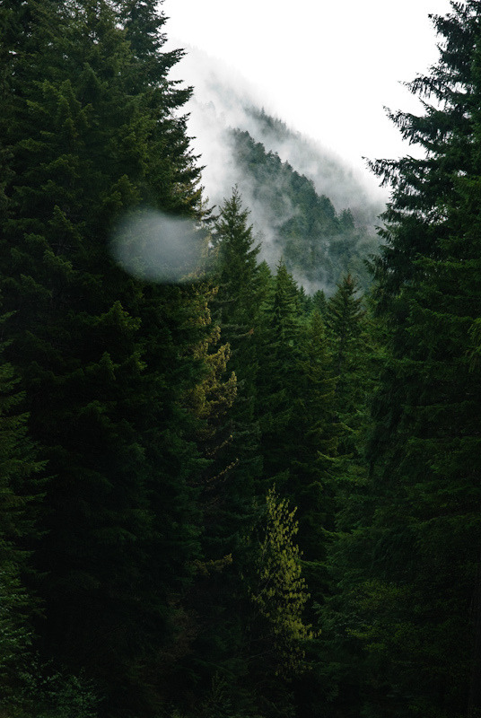 mydearmilo:  trees and fog