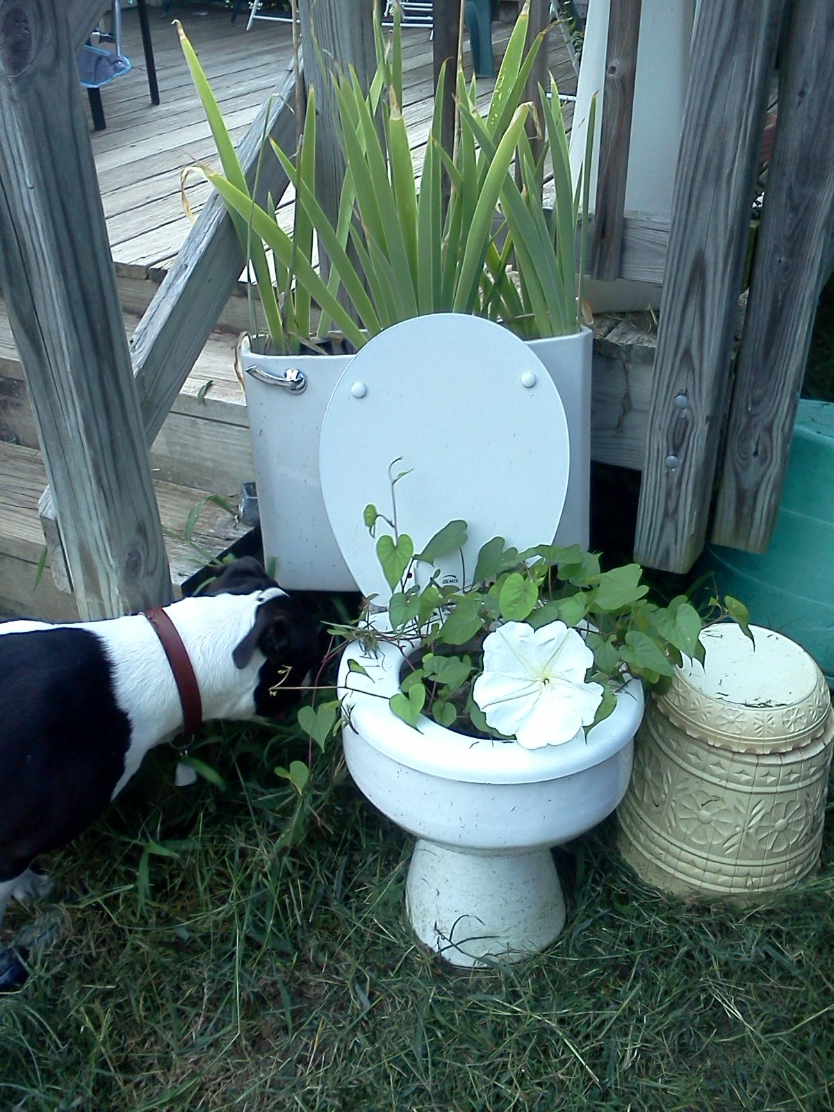 My toilet is blooming.