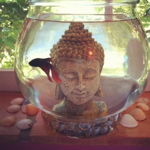 mysticmoonbeam:  we-all-share-one-moon:  i want a cute little fish bowl with a cute little buddah head and a cute little fishy.   woaaah man my little fishy got so many reblogs