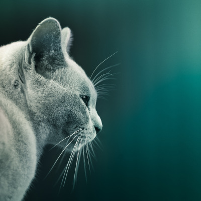 Cat (by ►CubaGallery)