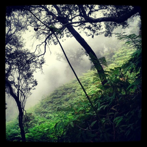 Fog of Tangkuban Perahu #forest #westjava #tangkubanperahu #fog #holiday #Indonesia (Taken with Instagram)