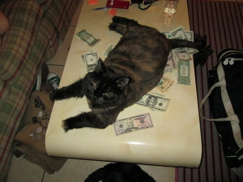 gil-narmor:  Our cat, Godzilla, decided while I was counting the money from Bronycon that it was a nice place to lay down.  She is a fucking stripper whore.