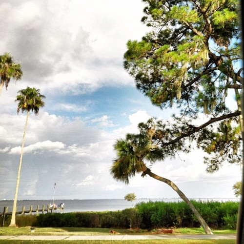 #clouds #sky #pretty #nature #landscape #palmtree #tampabay #dock #iphone #iphoneonly #iphonesia #ikonic (Taken with Instagram)