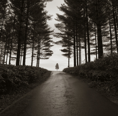dawnawakened:  A tree travelling on the road