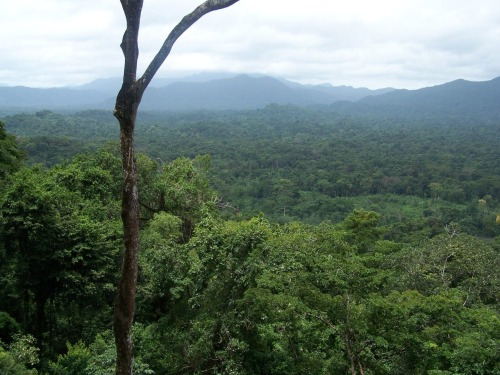 PICTURED ABOVE: Rio Platano Biosphere Reserve. The International Coordinating Council of UNESCO's Man and the Biosphere Programme has added 20 new sites, including two transboundary, to the World Network of Biosphere Reserves.  The network now includes 598 reserves in 117 countries. Biosphere Reserves were inscribed in Haiti, Kazakhstan, and Sao Tome and Principe for the first time this year. Biosphere Reserves are areas designated under UNESCO's Man and the Biosphere Programme to serve as places to test different approaches to integrated management of terrestrial, freshwater, coastal and marine resources and biodiversity. Biosphere Reserves are thus sites for experimenting with and learning about sustainable development. Brief descriptions of the new sites are HERE.