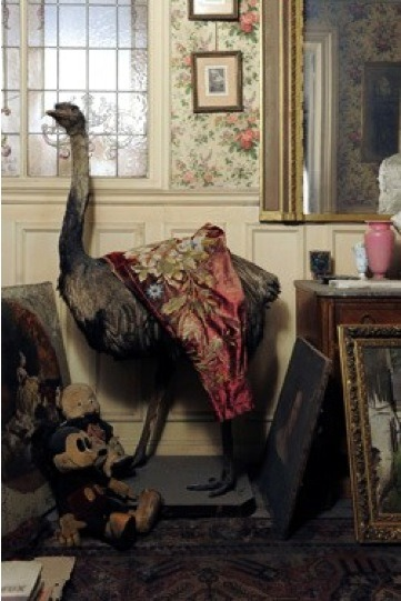 Stuffed ostrich, Where but in a Paris apartment, locked for 7 decades?