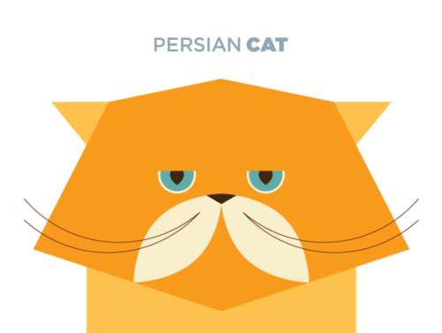the truth about persian cats: they are so effing cute! #someday