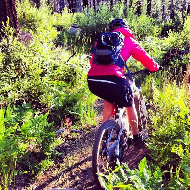 Summertime singletrack #tahoe #mtb #wildflowers (Taken with Instagram)