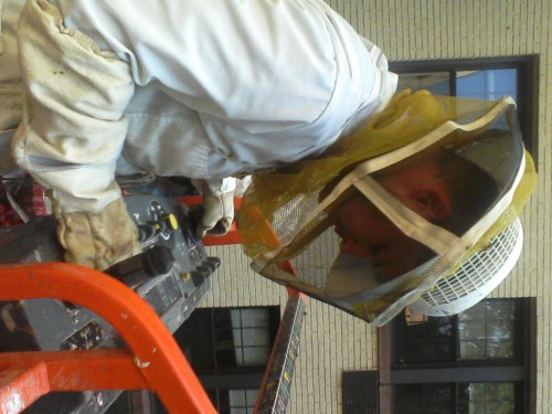 Reporting live from a cherry picker. This was my first hive extraction!! This has been quite the exciting week.