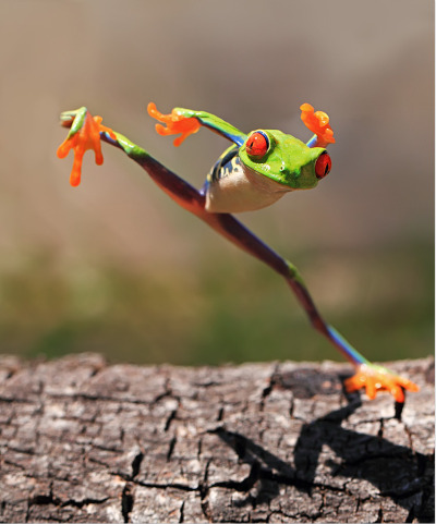 kingdom-of-animals:  Kungfu Frog by  shikhei goh.