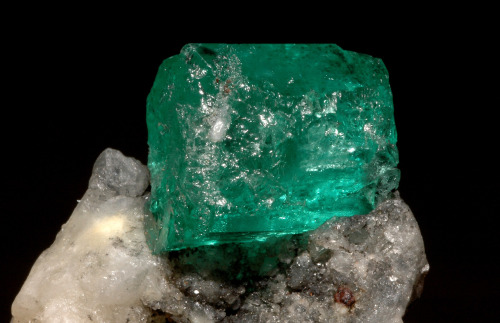crownedrose:  Emerald (var. beryl) on matrix