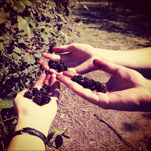 Our earnings, blackberry picking. :) Oh Sunday's.
