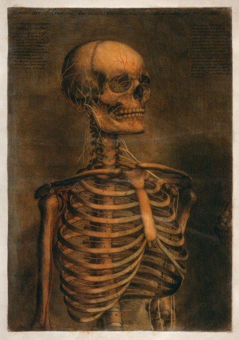 forbiddenalleys:  From the Anatomical Atlas, Jacques Fabian Gautier d'Agoty (1717-1785)
