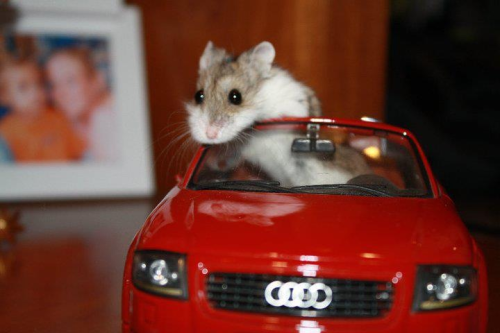 theclearlydope:  The Transporter.  bunnyfood:  (via Imgur)   Stuart Little? Is that you?