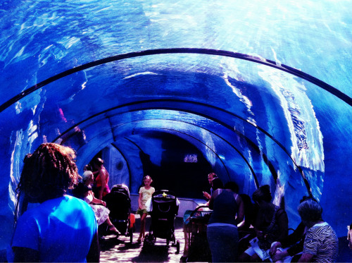 Under Water Tunnel