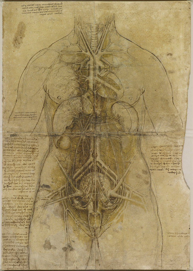 Leonardo da Vinci's Anatomical Drawings Or, why hanging out in morgues and dissecting corpses is cool if you're a genius.