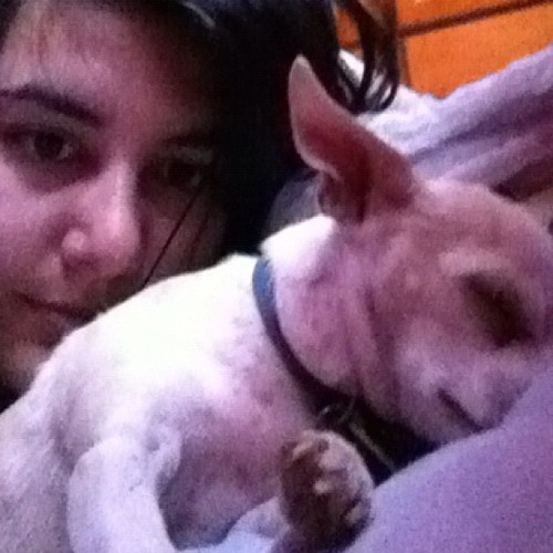I don't wanna get out of bed #snuggling #dog #buddy #iwanttosleepallday 🐶💤😘💘 (Taken with Instagram)