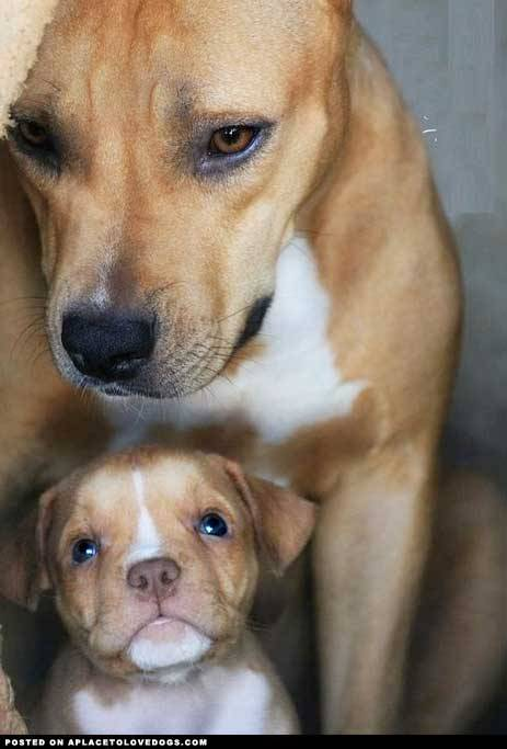 aplacetolovedogs:  imgur A new momma with her baby Original Article